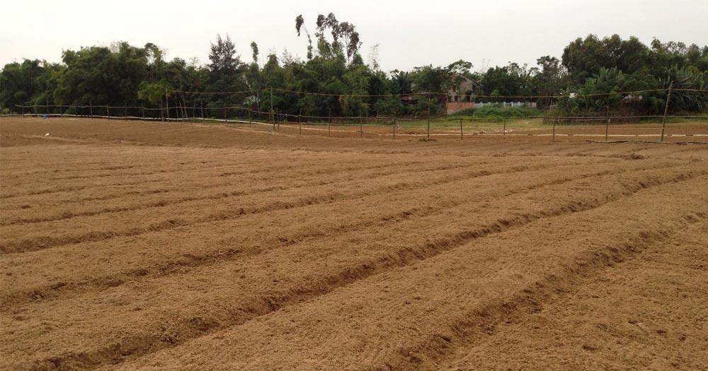 Cách cày, bừa, phơi đất