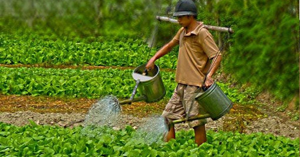 Tưới nước cho rau màu