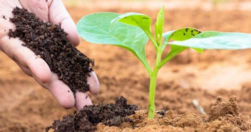 Phân bón hữu cơ là gì?