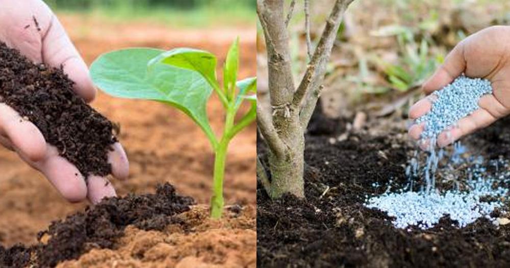 Sự khác biệt giữa phân bón vô cơ và phân bón hữu cơ